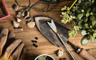 Gardening Tips for Maximum Curb Appeal